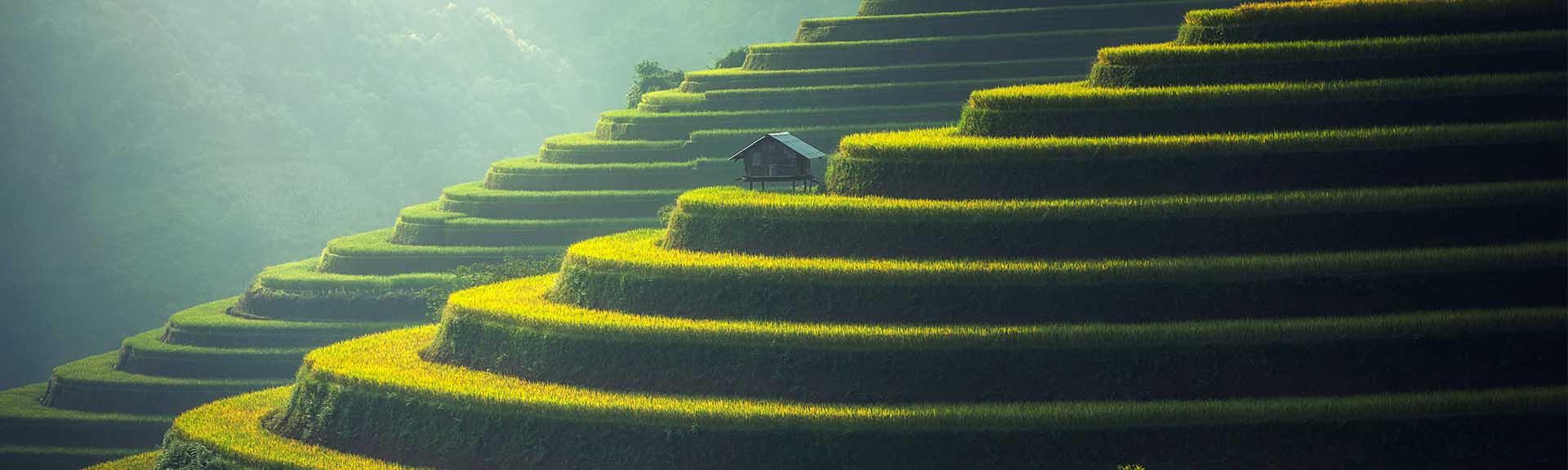 Penser la conversion écologique avec les traditions asiatiques-Cours UNIVA