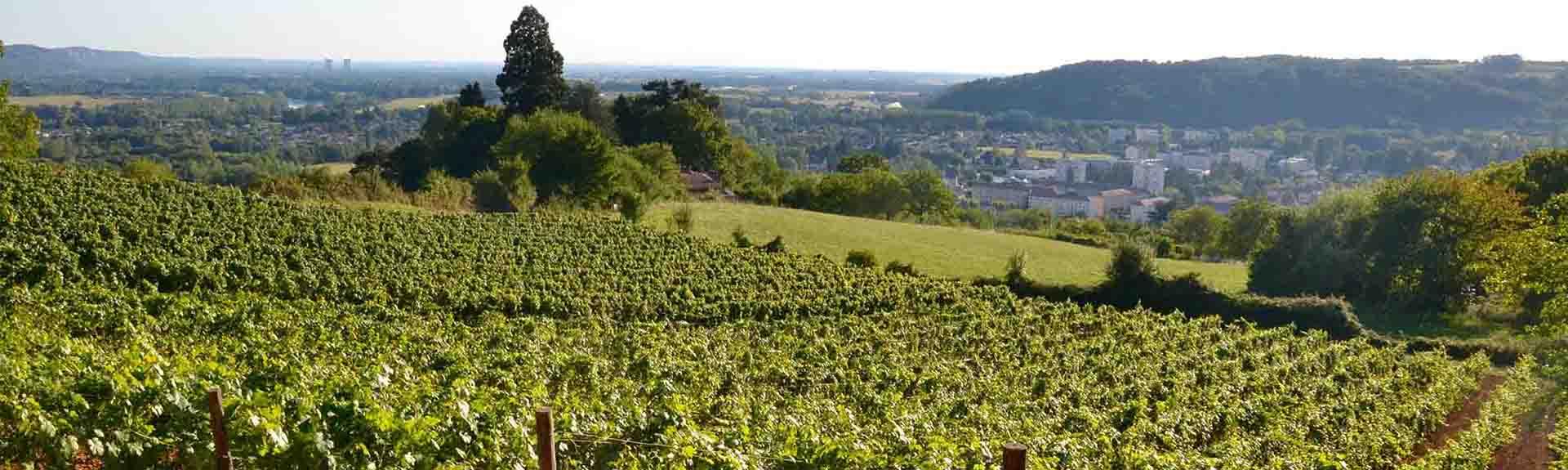 Terroirs de la vallée du Rhône-Cours UNIVAL